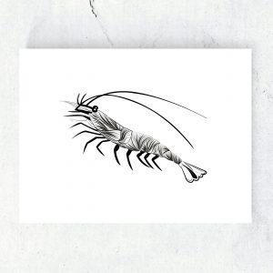 ansichtkaart-poster-illustratie-garnaal-zwart-wit-fine-lines-studio-tosca-ansichtkaart